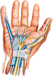 Carpal Tunnel Syndrome » Lillian S. Wells Department of Neurosurgery ...